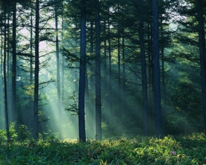 Photo of light in forest